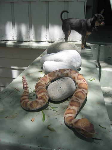 dog_and_snake