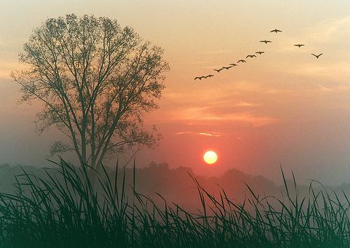 geese_at_dawn